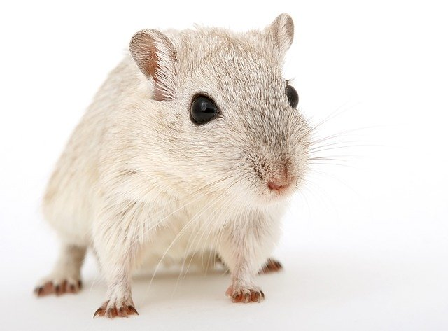 Stop rodents from causing damage